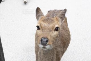 近くに動物のアップの写真・画像素材[1713462]