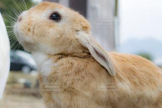 近くに動物のアップの写真・画像素材[1713499]
