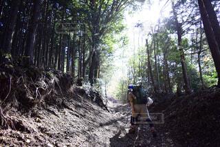 森の中の未舗装の道路を自転車に乗る男の写真・画像素材[1716557]
