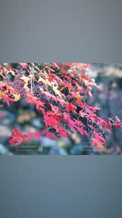 近くの木のアップの写真・画像素材[1711871]