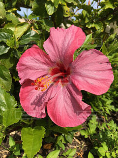 近くの花のアップの写真・画像素材[1712430]