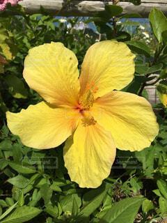 花の写真・画像素材[1712431]