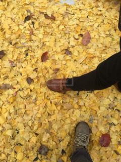 イチョウの木落ち葉の写真・画像素材[1713947]