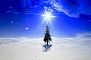 雪のクリスマスツリー🌲の写真・画像素材[1716571]