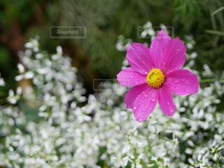 お花ドアップの写真・画像素材[1714331]