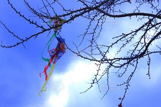 空を飛んでいる鳥の写真・画像素材[1731678]