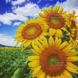 植物の色とりどりの花の写真・画像素材[4409577]