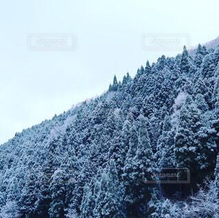 雪に覆われた木 - No.1129421