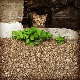 お散歩で出会った地域猫の写真・画像素材[1715009]