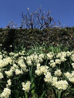 花の写真・画像素材[13887]