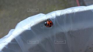 虫の写真・画像素材[61417]