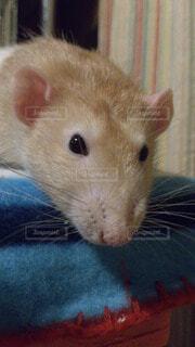 動物の写真・画像素材[63375]