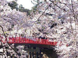 弘前城の桜の写真・画像素材[60270]