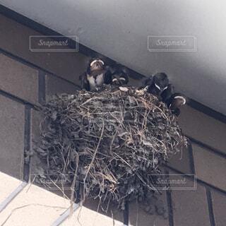 家にツバメの巣の写真・画像素材[1719881]