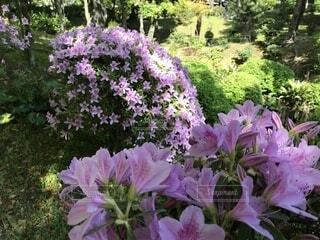 植物にピンクの花の写真・画像素材[1720358]