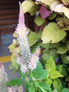 近くの花のアップの写真・画像素材[1737036]