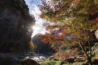高千穂峡の紅葉の写真・画像素材[1719665]