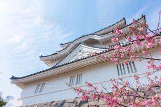 大多喜城の写真・画像素材[1810699]