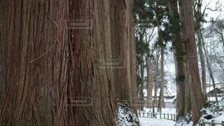 雪の木の写真・画像素材[1718552]