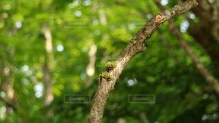 木の枝にとまった鳥の写真・画像素材[1719000]