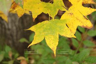 近くの木のアップの写真・画像素材[1719492]