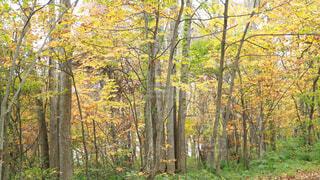 フォレスト内のツリーの写真・画像素材[1721296]