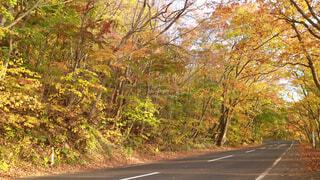 道路の真ん中にツリーの写真・画像素材[1721405]