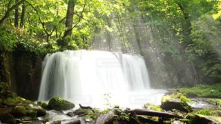 森の中の大きな滝の写真・画像素材[1729247]