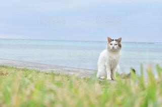 海岸の猫の写真・画像素材[1774642]