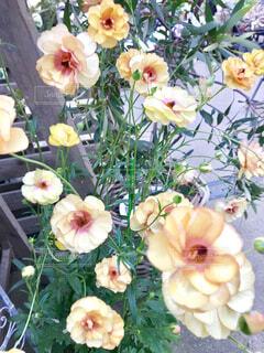花の写真・画像素材[2037780]