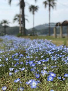 水色の花の写真・画像素材[2095288]