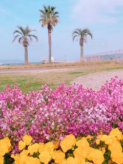 お花満開の公園の写真・画像素材[2095301]