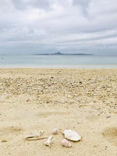 海岸の貝殻の写真・画像素材[2138897]