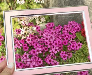 フレームの中の自然の花の写真・画像素材[2282094]