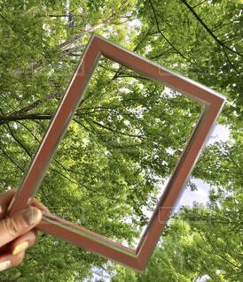 フレームからのぞく木々の輝きの写真・画像素材[2282101]