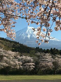 背景の山と木の写真・画像素材[1718232]