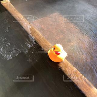 温泉とあひる隊長の写真・画像素材[1718986]