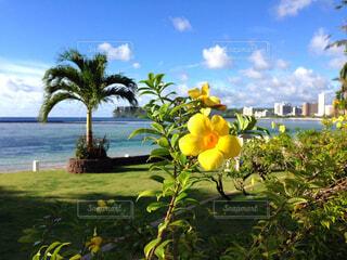 南国の黄色い花♡の写真・画像素材[1739366]