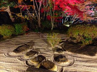 秋の庭園の写真・画像素材[1739423]