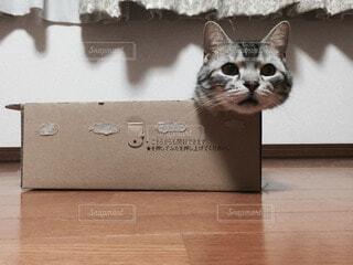 猫 - No.60401