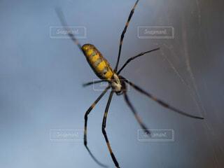 白い表面にクモの写真・画像素材[1719259]