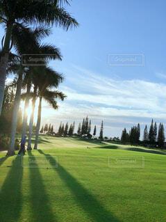 ハワイのゴルフ場の写真・画像素材[1719359]