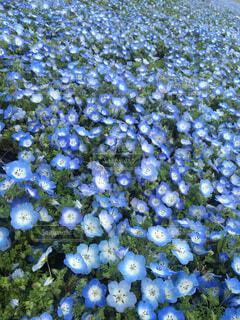 花の絨毯の写真・画像素材[1720810]