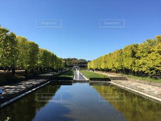 広い空と木々の写真・画像素材[1725957]