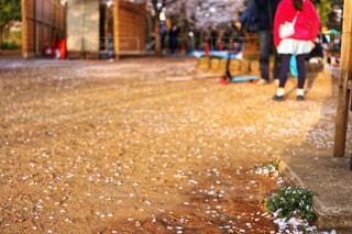 散った桜の写真・画像素材[1720849]