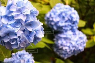 近くの花のアップの写真・画像素材[1720868]