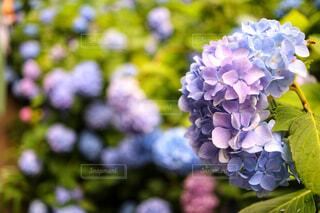 近くの花のアップの写真・画像素材[1720872]