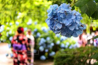 近くの花のアップの写真・画像素材[1720902]