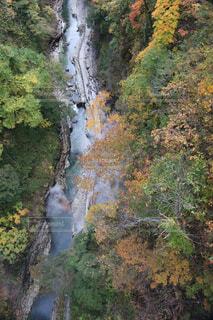 森の中の大きな川の写真・画像素材[1721316]