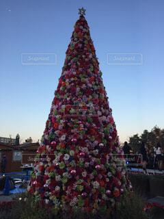 クリスマスツリーの写真・画像素材[1722930]
